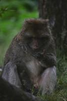 0481 Monkey Forest