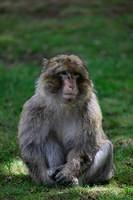 0748 Monkey Forest